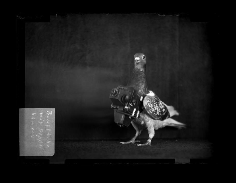 Pidgeon Camera