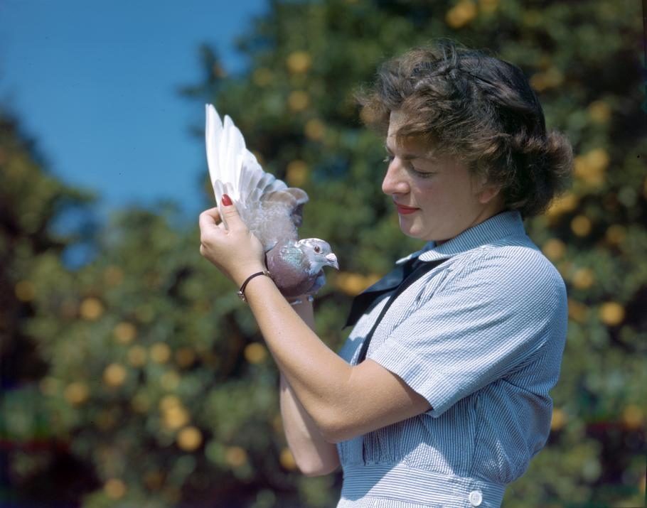 Specialist (X) second class Marcelle Whiteman gently holds one of the 200 carrier pigeons