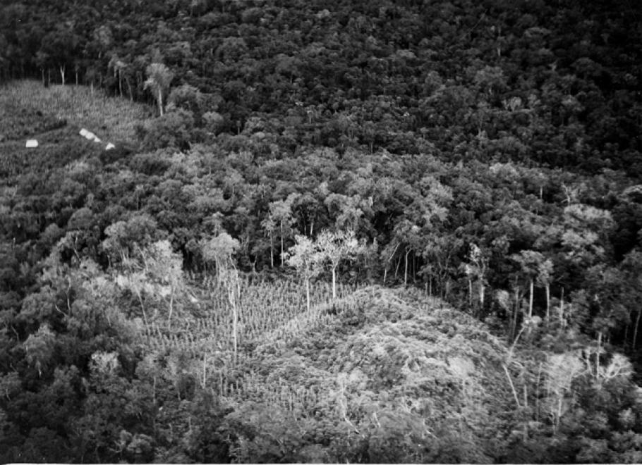 The Carnegie Institution camp is to the left of cleared but unexcavated ruins in foreground. Uaxactun, Guatemala Image: Yale University Library