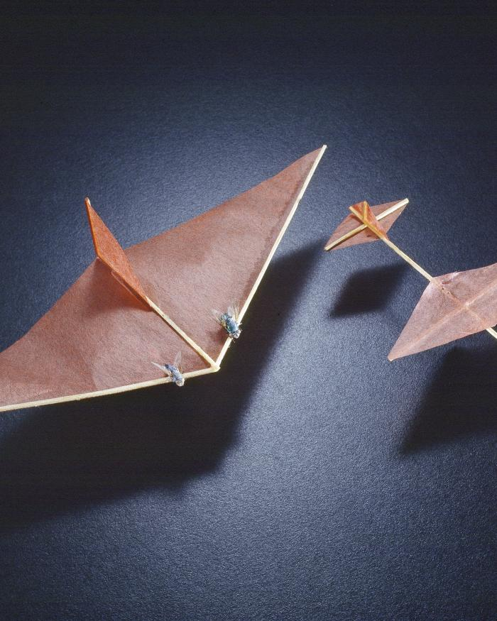 Insect Powered Model Airplanes