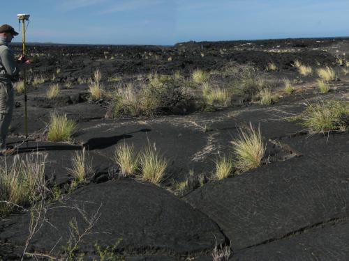 A field of Volcanic Rock Located in Hawaii
