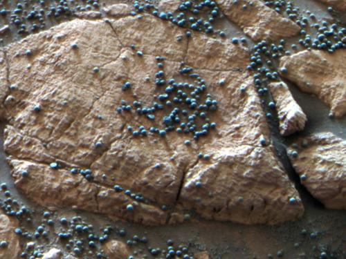 A Bowl Full of Blueberries