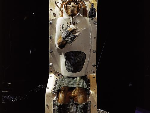 Able (monkey) in Apollo to the Moon