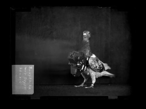 "Julius Neubronner's ""Pigeon Camera."""