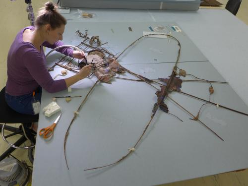 Conservator works over a kite with tools.