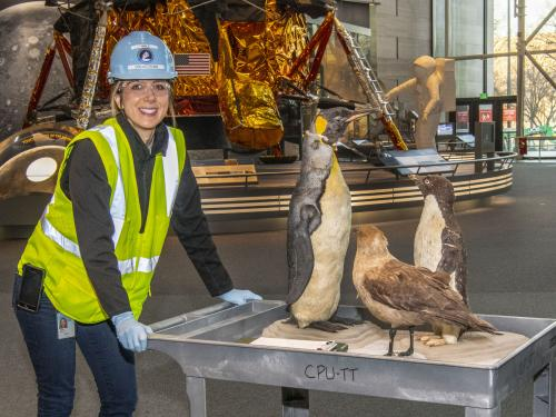 "Museum's collections team moving birds from the ""Golden Age of Flight"" exhibition"