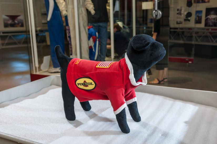 Sweater on a prop dog.