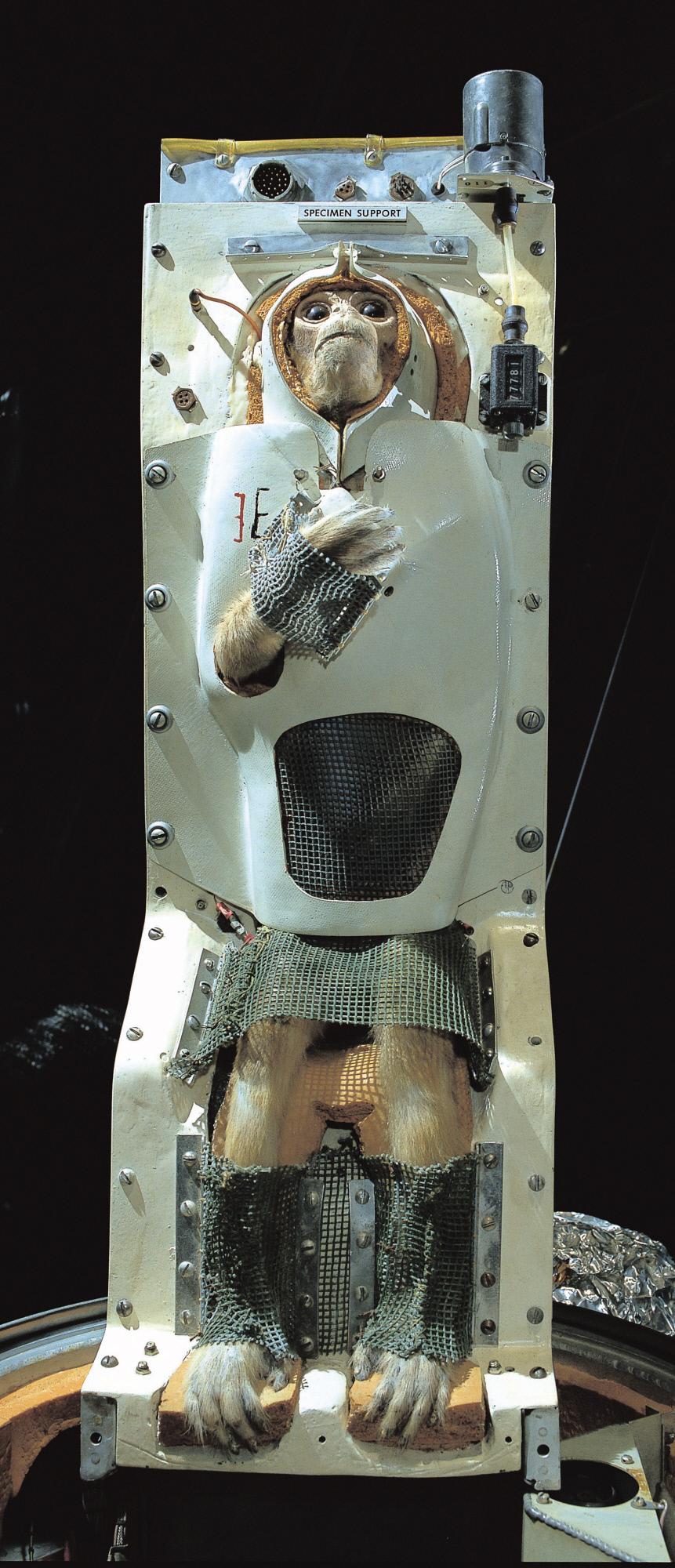 Image of : Biocapsule, Primate