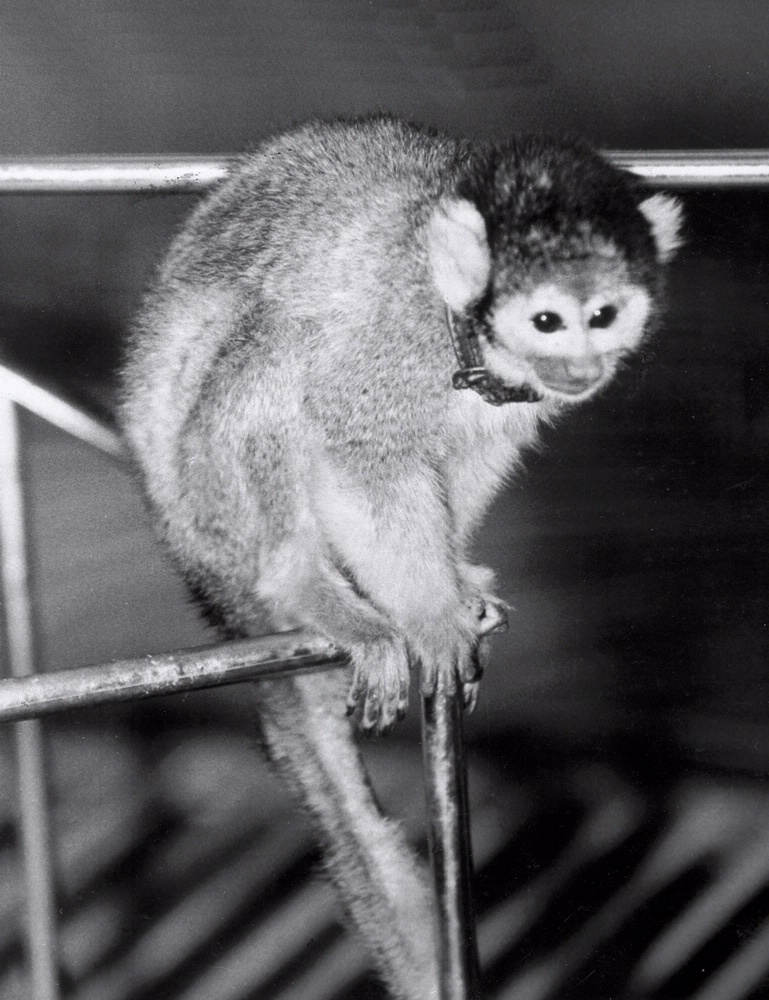 U.S. Space Rocket with a Monkey (page 2) - Pics about space
