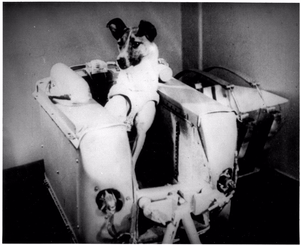 Laika, the first living being launched into orbit.